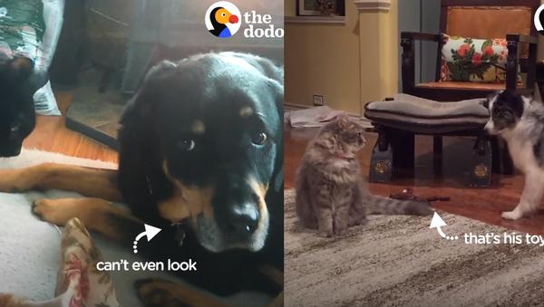 Scary Cats?: Four Dogs Frightened of Felines - Sputnik International