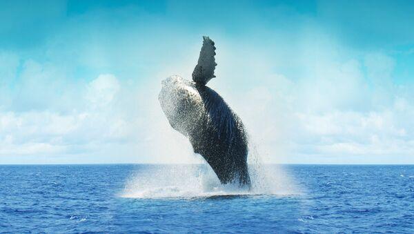 Whale - Sputnik International