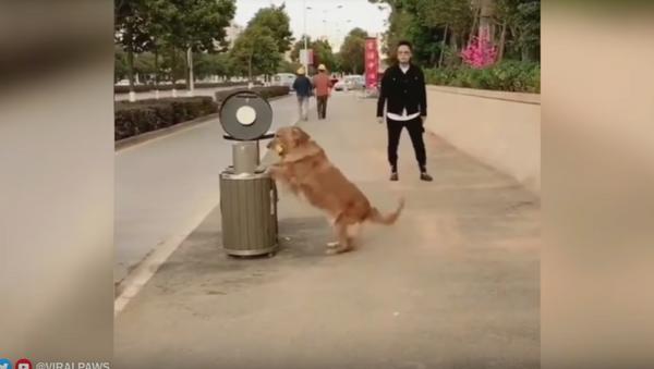 Good Samaritan! Green Golden Retriever Helps Keep Streets Clean - Sputnik International