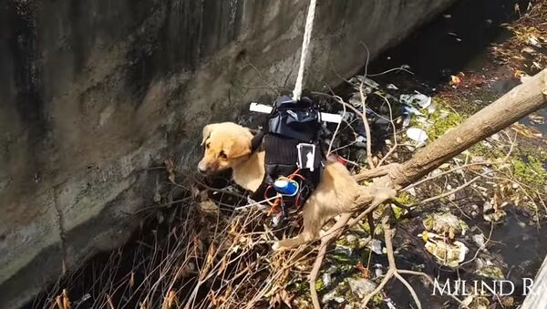 Puppy Rescue You Have Never Seen Before - Sputnik International