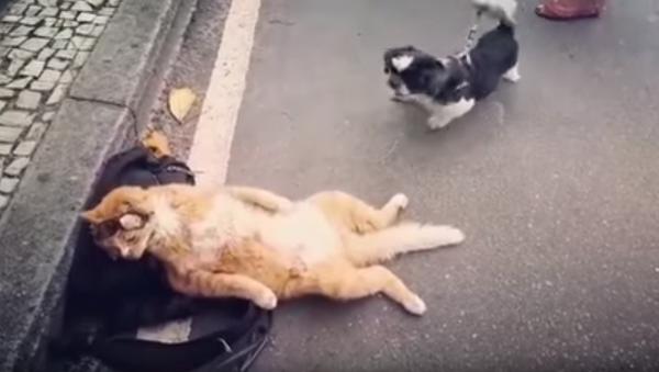 Chillin' Kitten Refuses to Let Yappy Dog Ruin His Day - Sputnik International