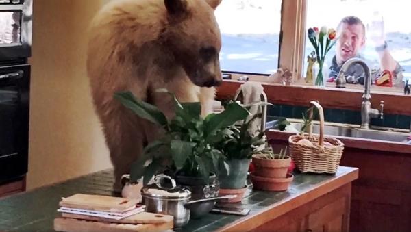 The Bear Necessities: Unlikely Intruder Raids Family's Kitchen - Sputnik International