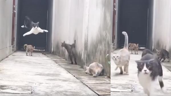 Parkour Kitty: Cat Makes Action-Packed Escape - Sputnik International