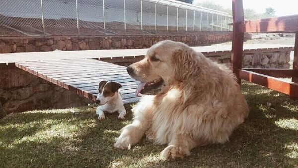 Marcela Temer's dogs - Sputnik International