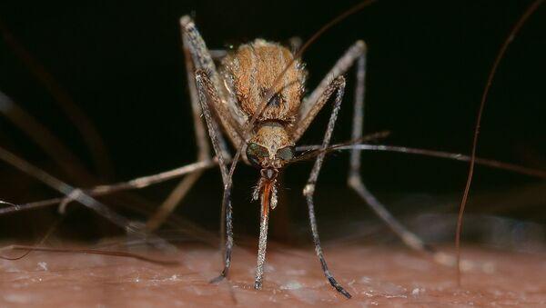 Mosquito - Sputnik International