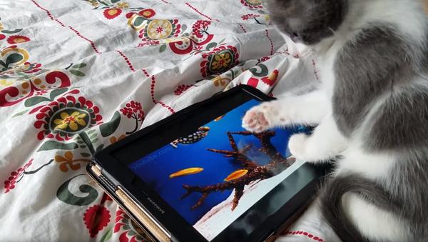 Gone Fishing: Kitten Confuses Tablet for Actual Aquarium - Sputnik International