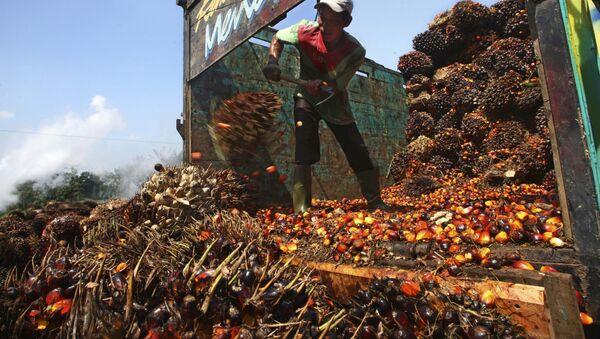 A worker unloads palm fruits at a palm oil processing plant in Lebak, Indonesia, Tuesday, June 19, 2012 - Sputnik International
