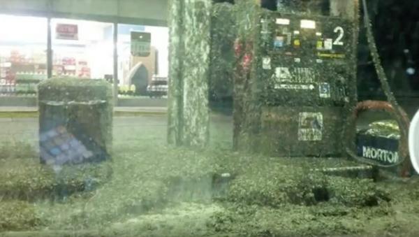 Refuel or Repent? Mayfly Swarm Masks Louisiana Gas Station - Sputnik International