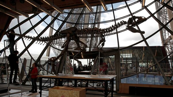 Workers reconstruct dinosaur fossil at the Eiffel tower, in Paris, France, June 2, 2018 ahead of its auction on Monday. - Sputnik International