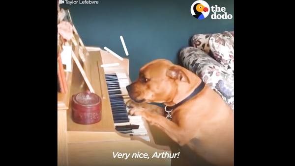 Piano Pooch: Musical Pup Paws the Ivories for Owner - Sputnik International