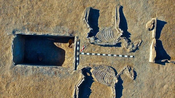 The nearby likeness of a chariot pulled by the two harnessed horses - believed to have been sacrificed for the burial - was also the grave of another similar couple, say archaeologists - Sputnik International