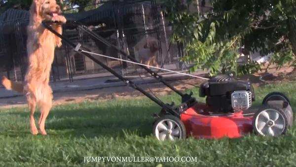 Talented Pooch Provides Lawn Service With a Smile - Sputnik International