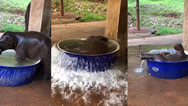 Rub-a-Dub Dumbo: Baby Elephant Beats the Heat While Bathing - Sputnik International