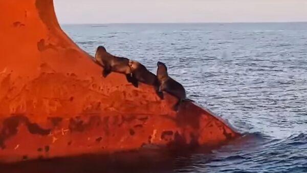 Seals - Sputnik International