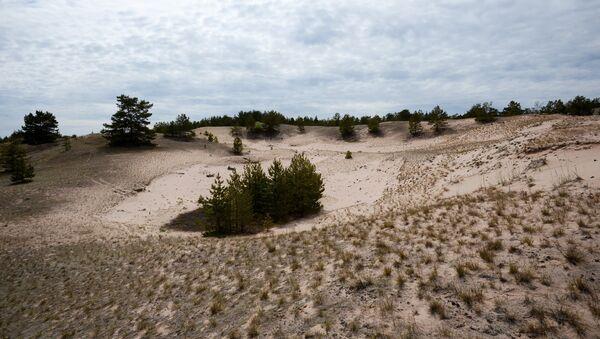 Dunes on Bolshoi Tyuters Island in the Gulf of Finland. - Sputnik International