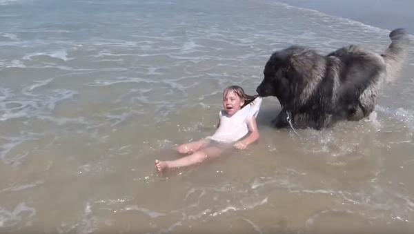 Playtime is Over: Dog Reels in Human from 'Dangerous' Ocean Waves - Sputnik International