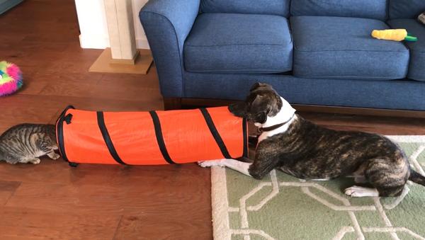 Into Thin Air? Swift Cat Leaves Dog Baffled - Sputnik International