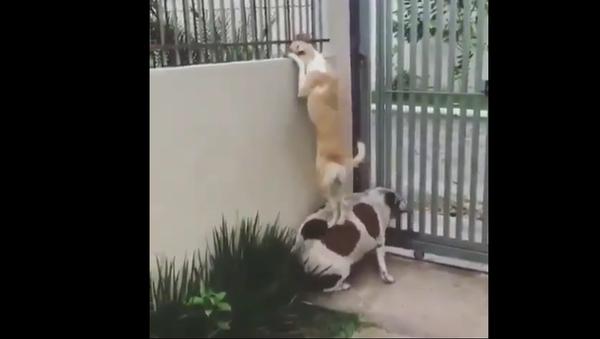 Dogs Near the Fence. - Sputnik International