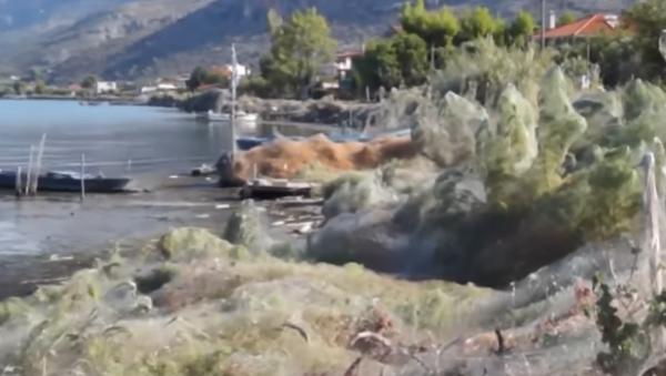 Shocking Giant Spider Web Covers Greek Island's Coast - Sputnik International
