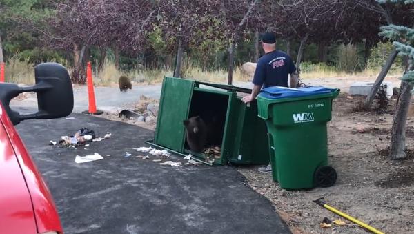 No Goldilocks: Fireman Frees Brown Bear Trio From Overturned Dumpster - Sputnik International