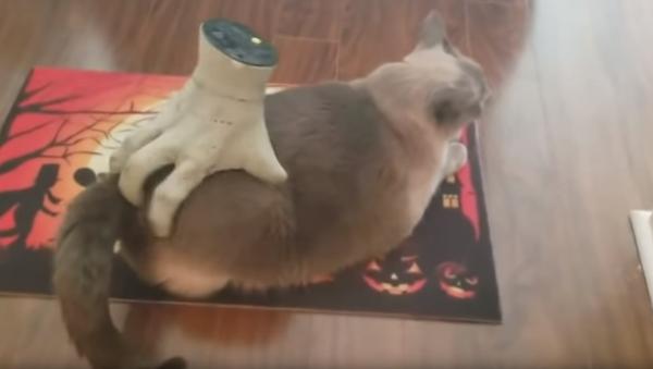 Cat Scratch: Fluffy Feline Enjoys a Spooky Massage - Sputnik International