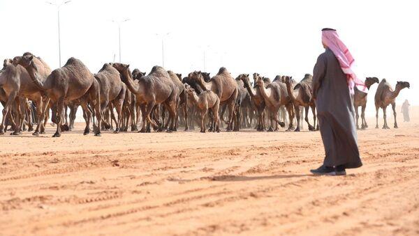 Camels - Sputnik International