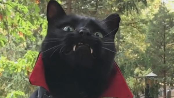 Black Cat With Vampire Fangs - Sputnik International