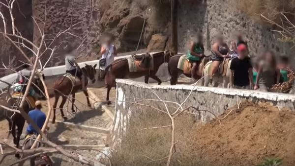 Donkeys on Santorini Abused and Used as Taxis - Sputnik International