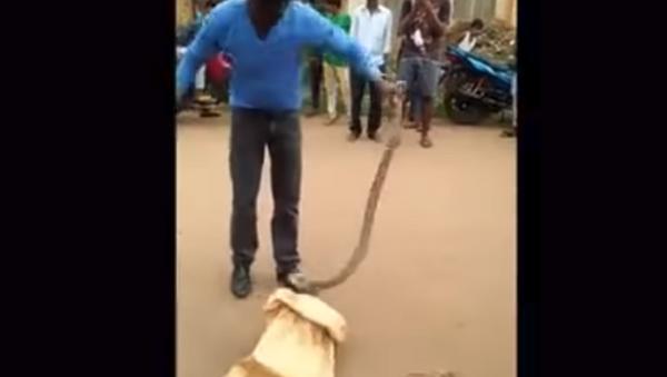 Amateur snake rescuer gets bitten in Odisha, India - Sputnik International