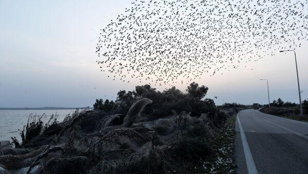 Птицы летают над покрытой паутиной растительностью у озера Вистонис в Греции  - Sputnik International