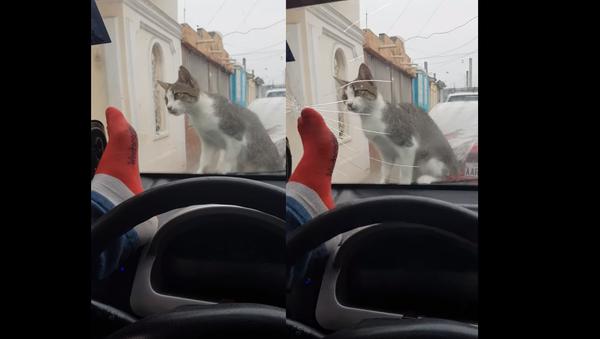 Motorist Immediately Regrets Attempt to Scare Cat - Sputnik International