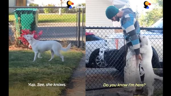 'Look at That Smeller Work!' Blind, Deaf Dog Immediately Senses Owner's Arrival - Sputnik International
