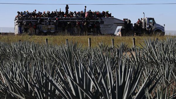 Central American migrants moving as a caravan to the U.S. border get a free ride on a truck past maguey farms as they depart Guadalajara, Mexico, Tuesday, Nov. 13, 2018 - Sputnik International