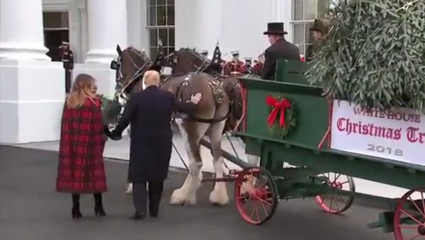 US President Donald Trump pats the bottom of one of the White House Christmas Tree's delivery horses - Sputnik International