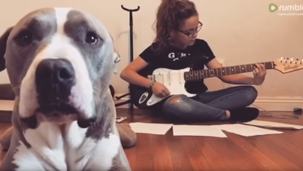 Canine Critic: Pit Bull Protests Music, Advocates for Attention - Sputnik International