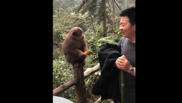 Monkey eats fruit - Sputnik International