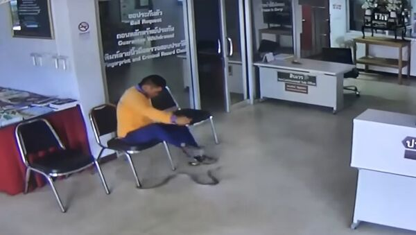 Snake Slithers Into Police Station And Jumps At Man - Sputnik International