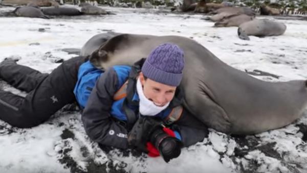 Surprise Snuggle: Elephant Seals Greet Wildlife Photographer - Sputnik International
