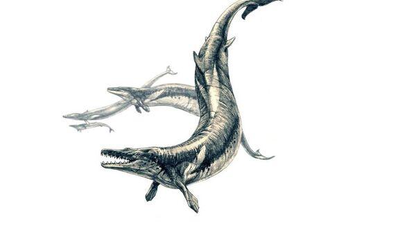 Basilosaurus - Sputnik International