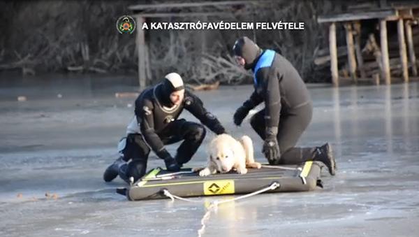 Hungarian Firefighters Save Canine Stranded on Frozen Lake - Sputnik International