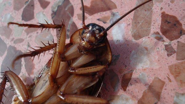 Dead cockroach, turned upside-down - Sputnik International