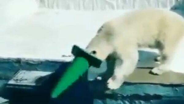 Polar Bear - Sputnik International