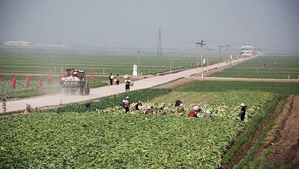 Migok Farm. Sariwŏn, North Korea - Sputnik International