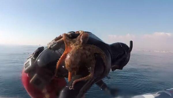 Octopus Clinges to Italian Diver's Back - Sputnik International