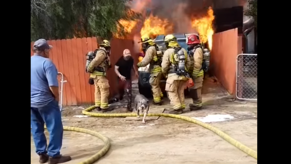 US Man Defies Firefighters, Runs Into Burning Home to Rescue Family Pit Bull - Sputnik International