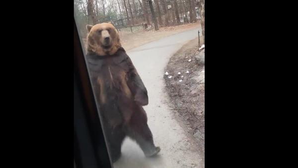 Upright Bear Appears to Mock Humans at South Korean Park - Sputnik International