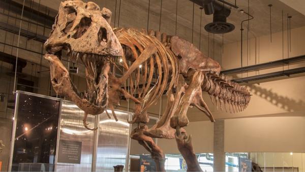 World's Biggest T-Rex Unearthed in Canada - Sputnik International