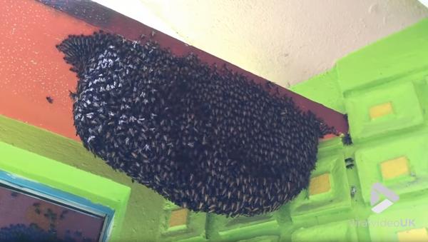 Honeybees Protect Habitat With Defensive Waves - Sputnik International