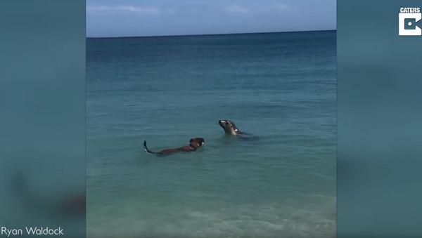 Dog Joins Social Sea Lion for a Swim - Sputnik International