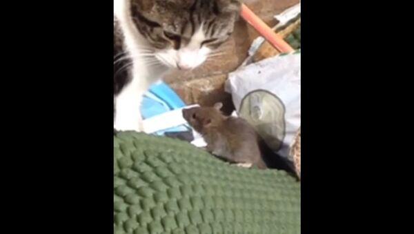 Cat and Mouse - Sputnik International